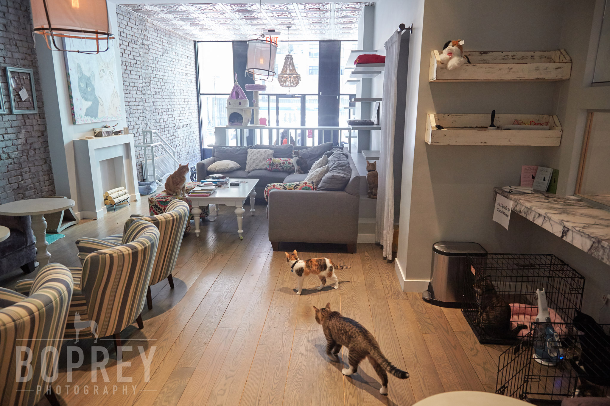 boprey-pet-photography-nyc-littlelions