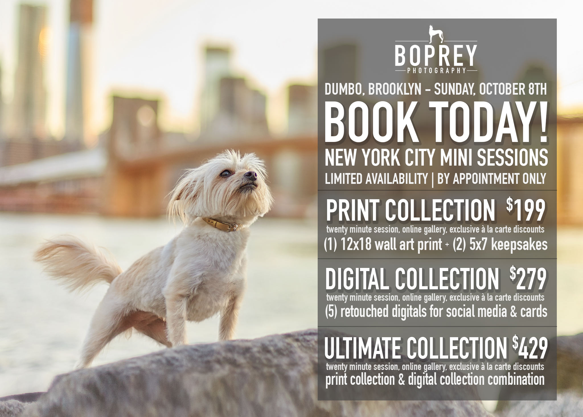 boprey-pet-portraits-nyc-photography.jpg