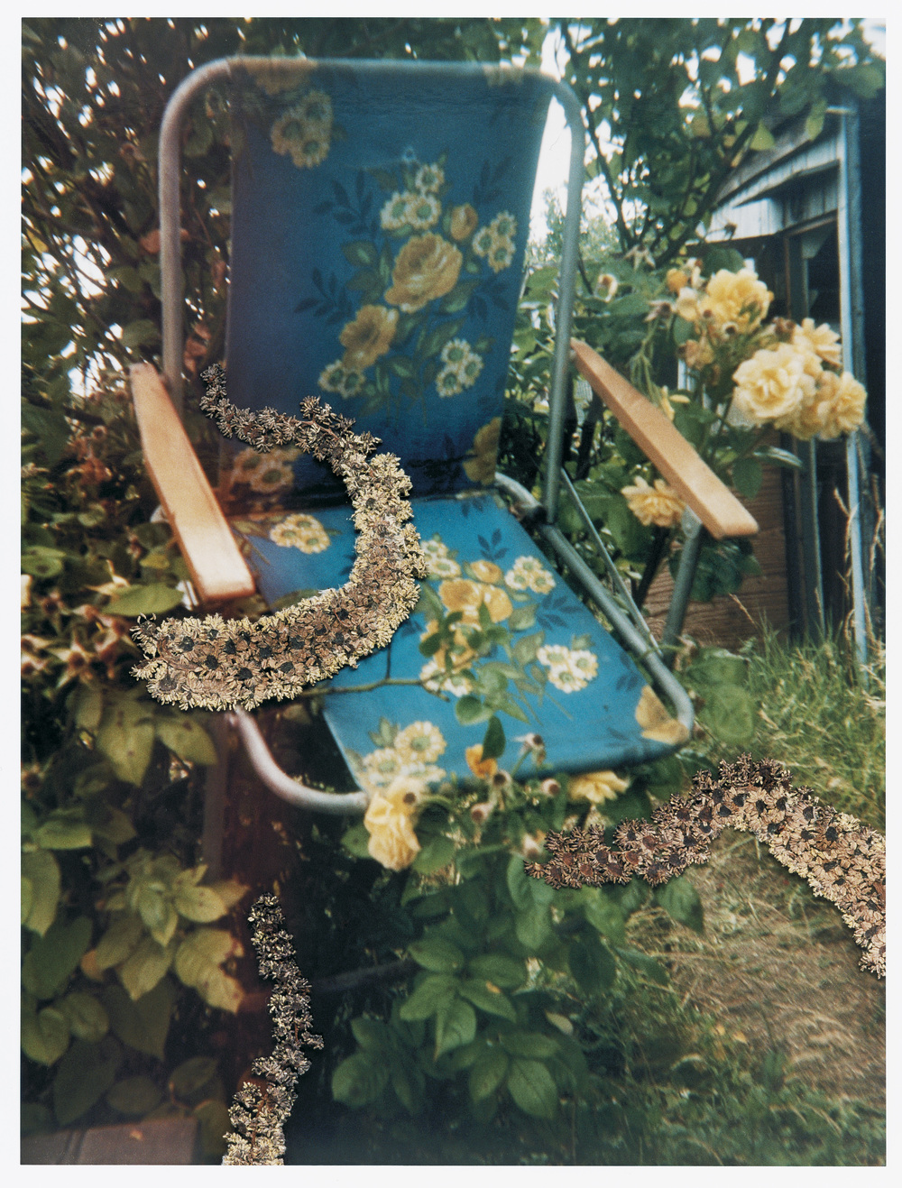 """""""Untitled"""" from the series Hackney Flowers, 2005 - 2007"""