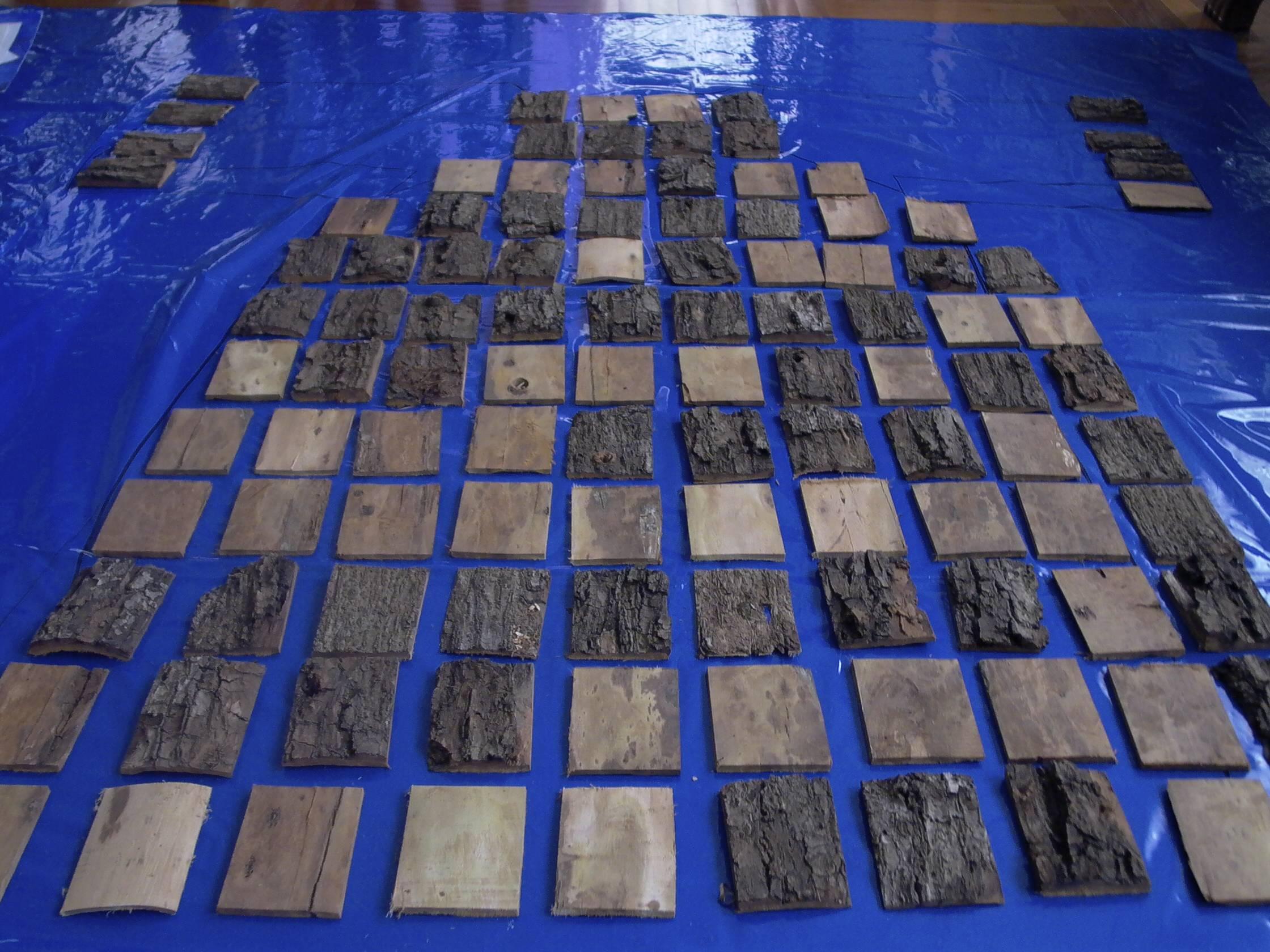 El Arbol WWF Project Bolivia 2006