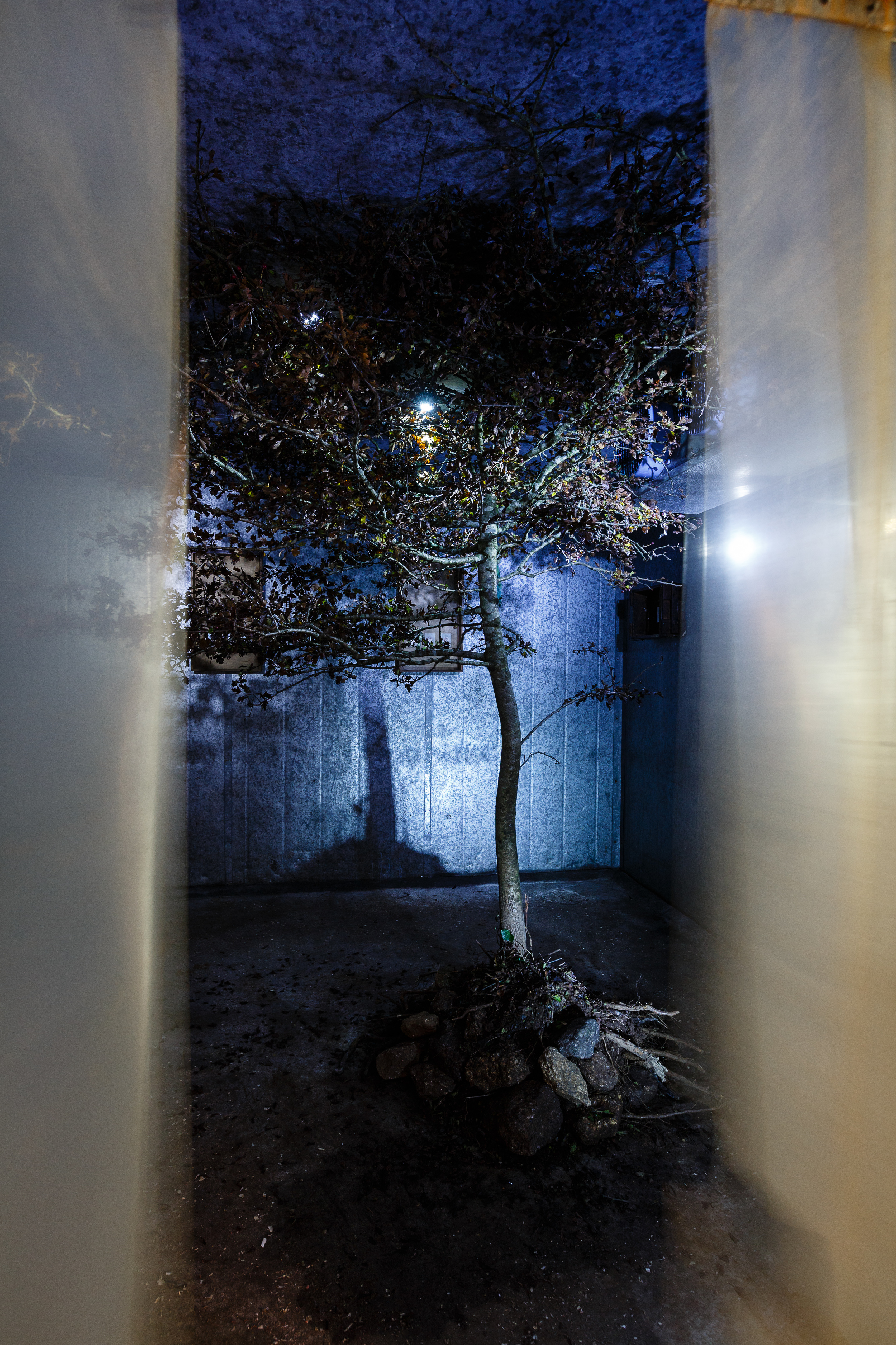 Nature boys sanctum. Inspiration from the poem Encapsulate by Simon Armitage.