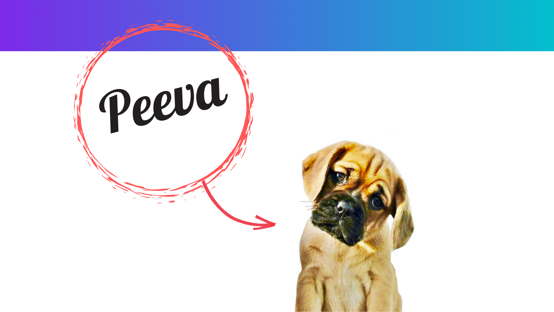 Peeva is building a network and a critical mass of data to save millions of missing pets and bring them home to their families as quickly as possible..png