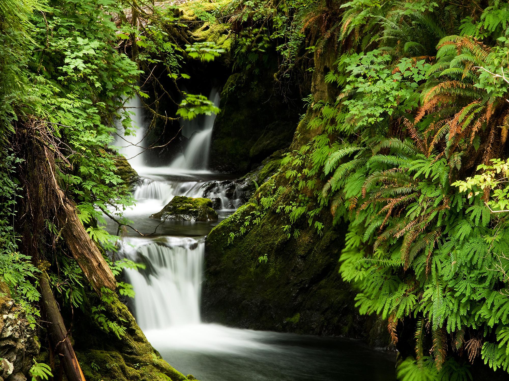 Quinault Rain Forest No. 1