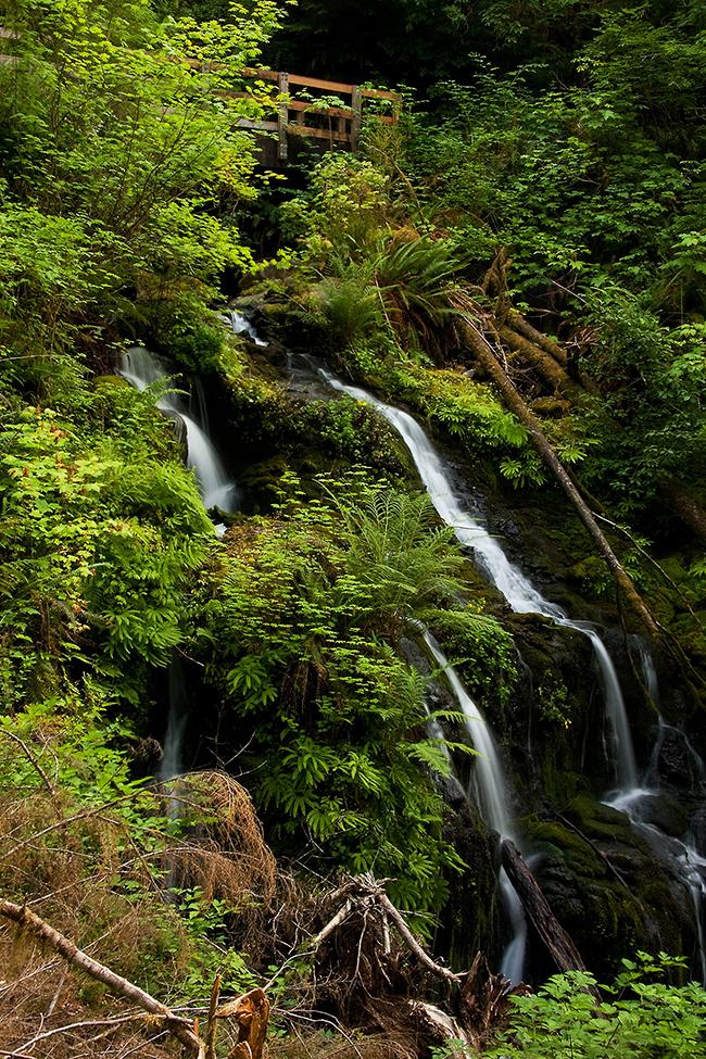 Quinault Rain Forest No. 3