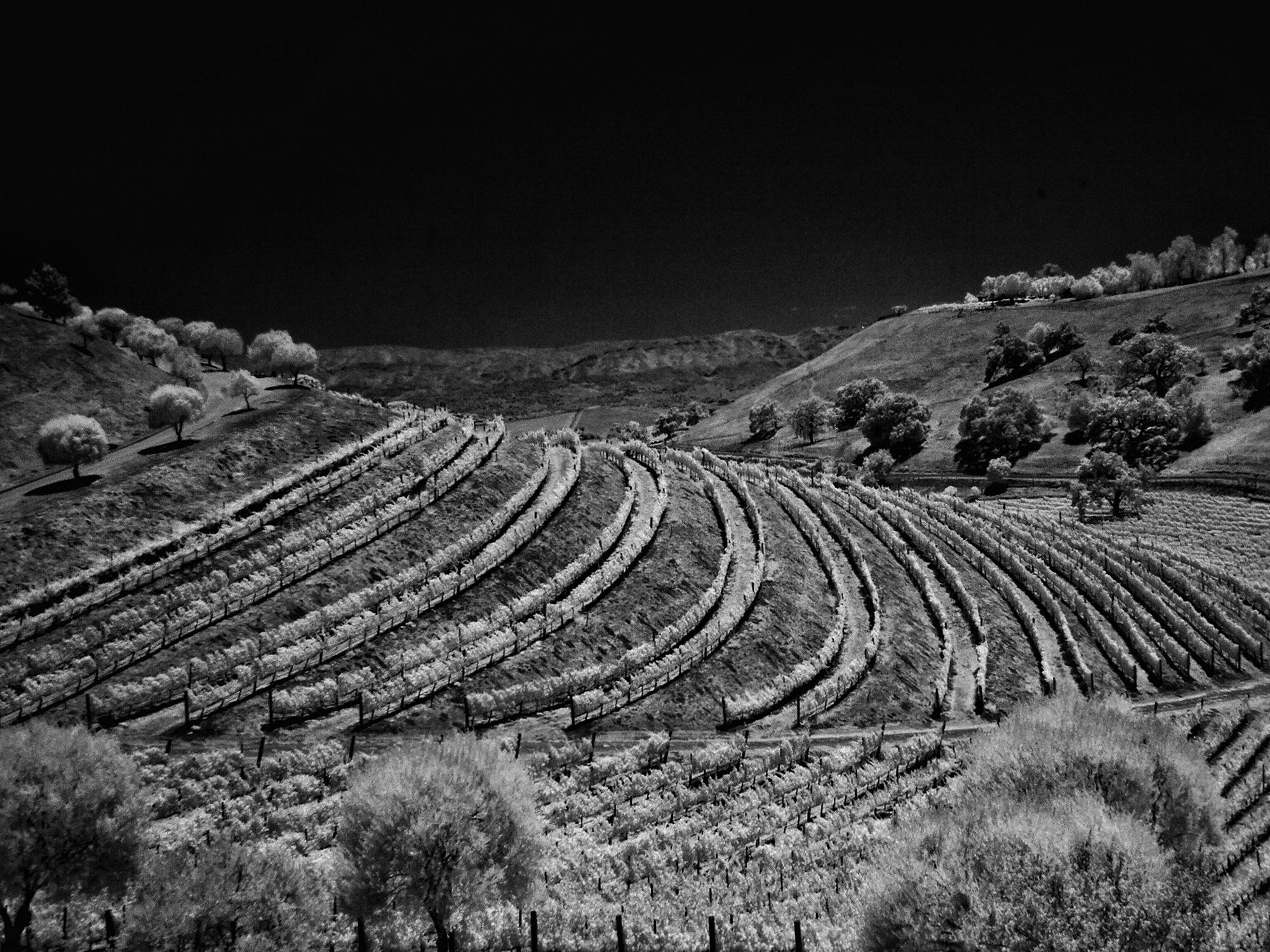 Santa Barbara Vineyard