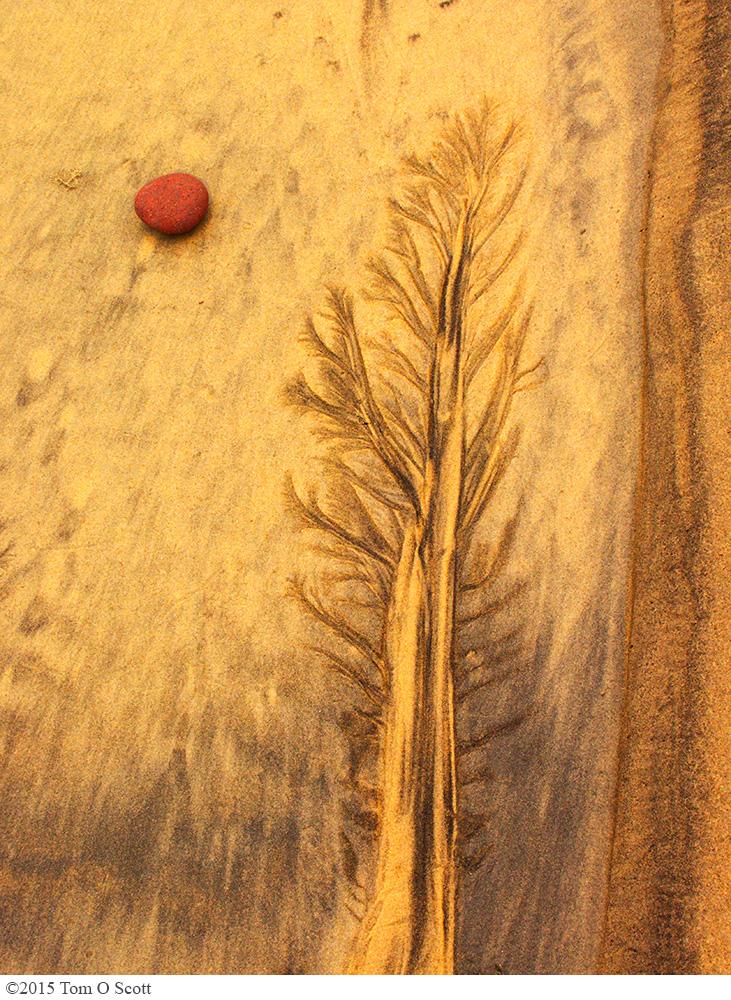 Sequoia Moon