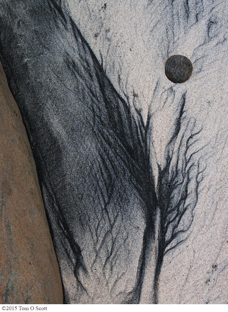 Torrey Pines Moon