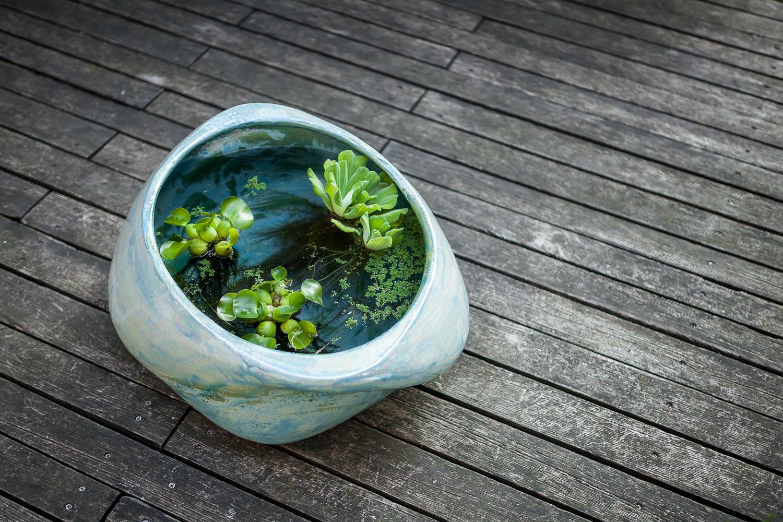 20160915-planter-IMG_4239.jpg