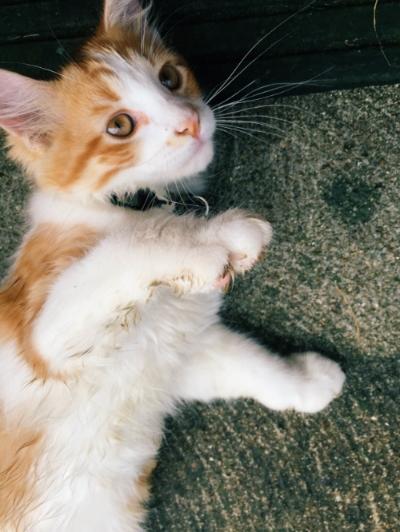 My nephew's new kitten, Mittens.
