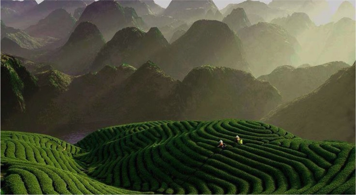 Zhejiang Pic.jpg