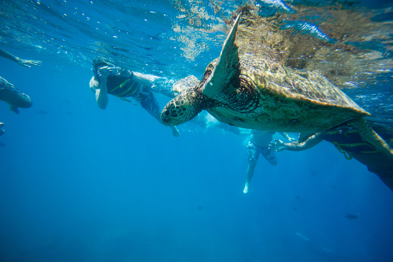 Snorkeling photography Kauai