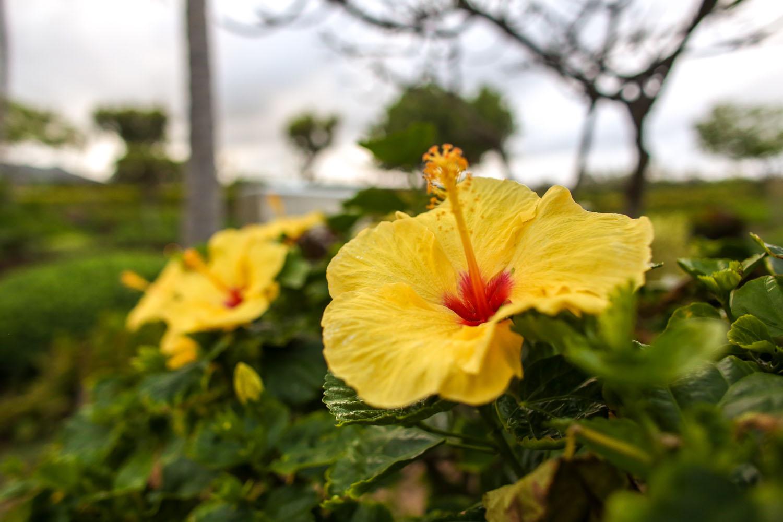 corporate photography Kauai