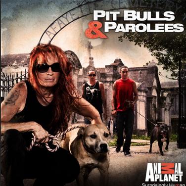 pitbulls.jpg