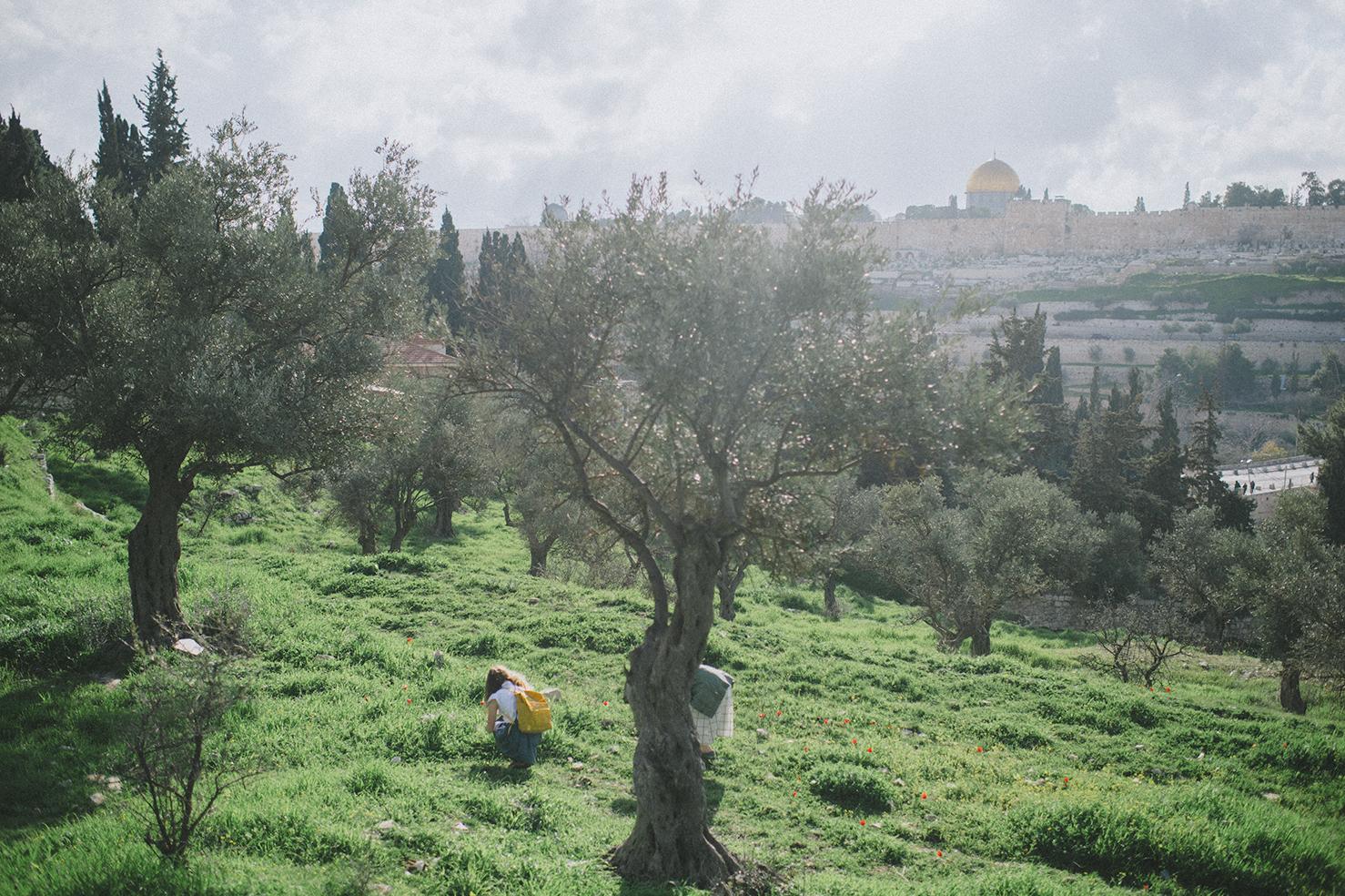 20190216_JERUSALEM-BREINHOLTS_261.jpg