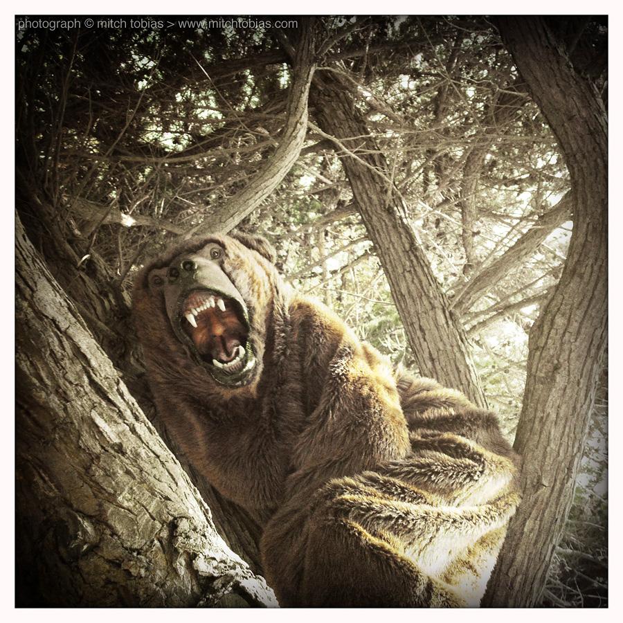 mitch_tobias_port_of_bears_tim_3786