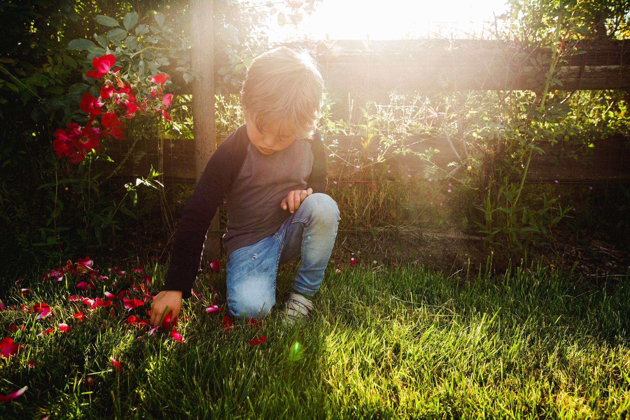 Atticus rose petals-1.jpg