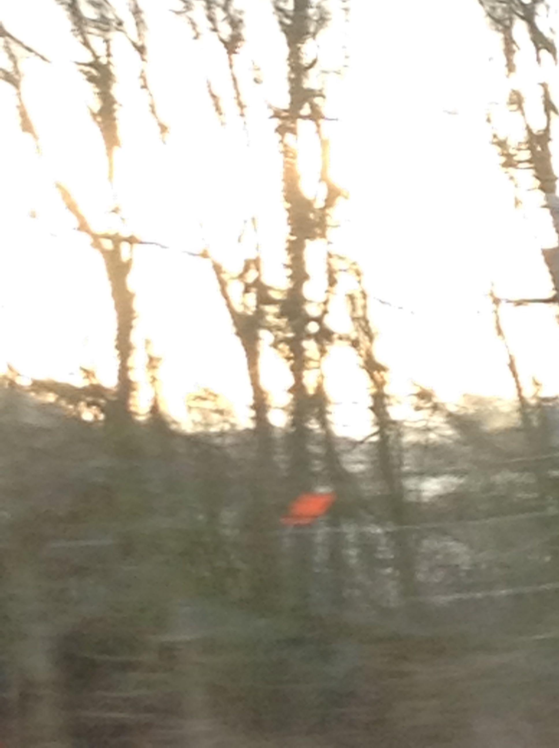 Sun & Trees.jpg