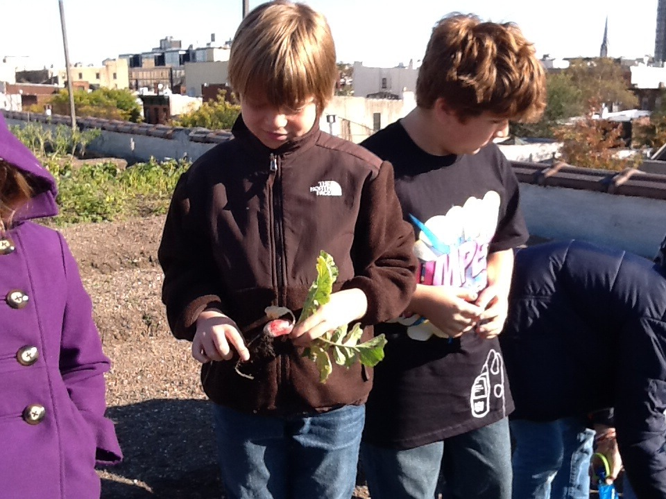 Students from JCC Manhattan Visiting a Rooftop Farm to see How real Food grows