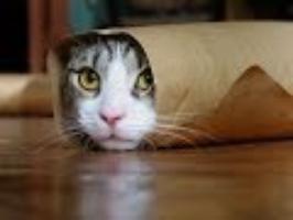 cat video pinch test blog.jpeg