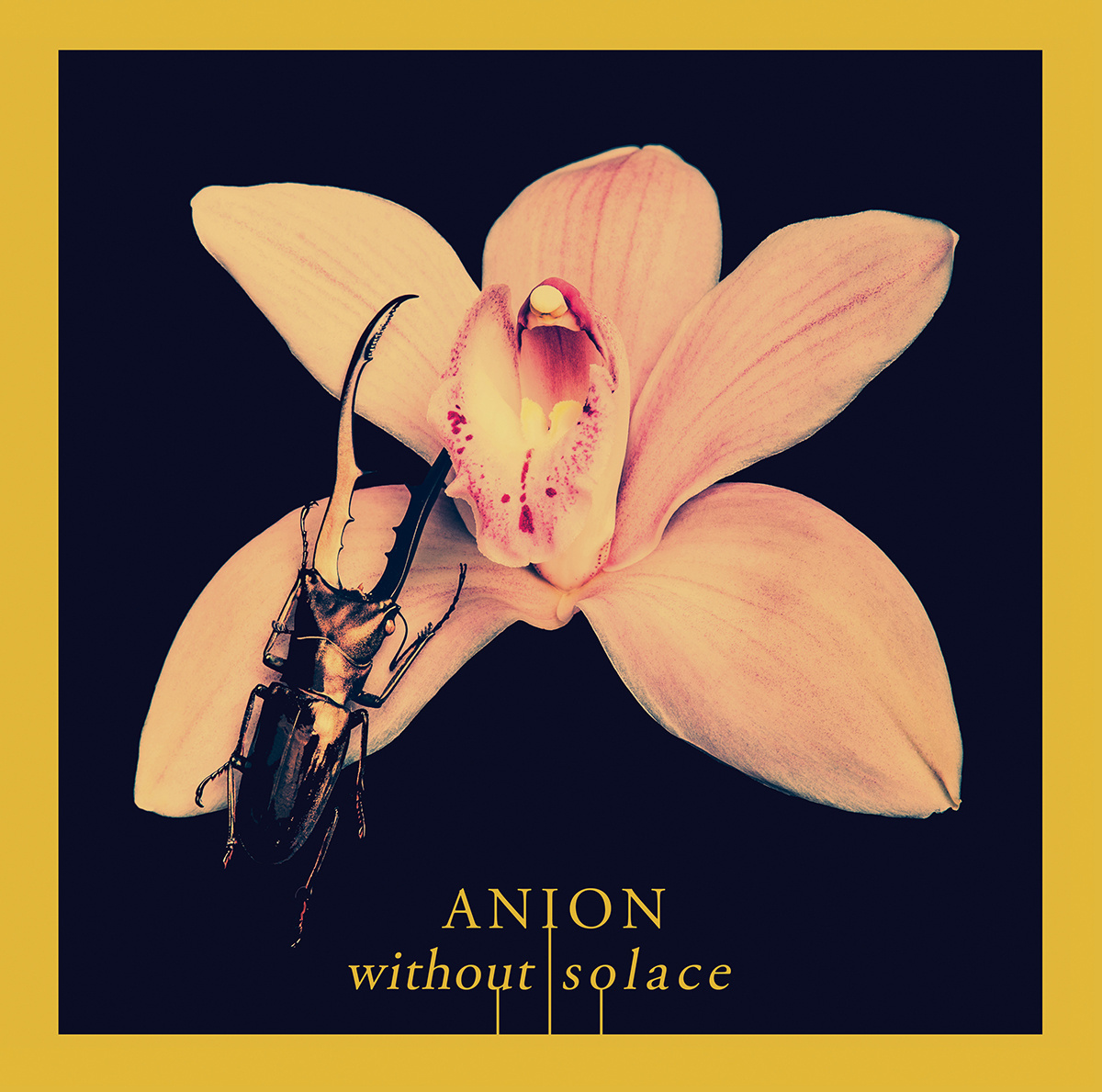 Without Solace<br />Anion
