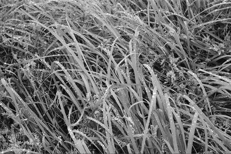 Nature-bw4.jpg