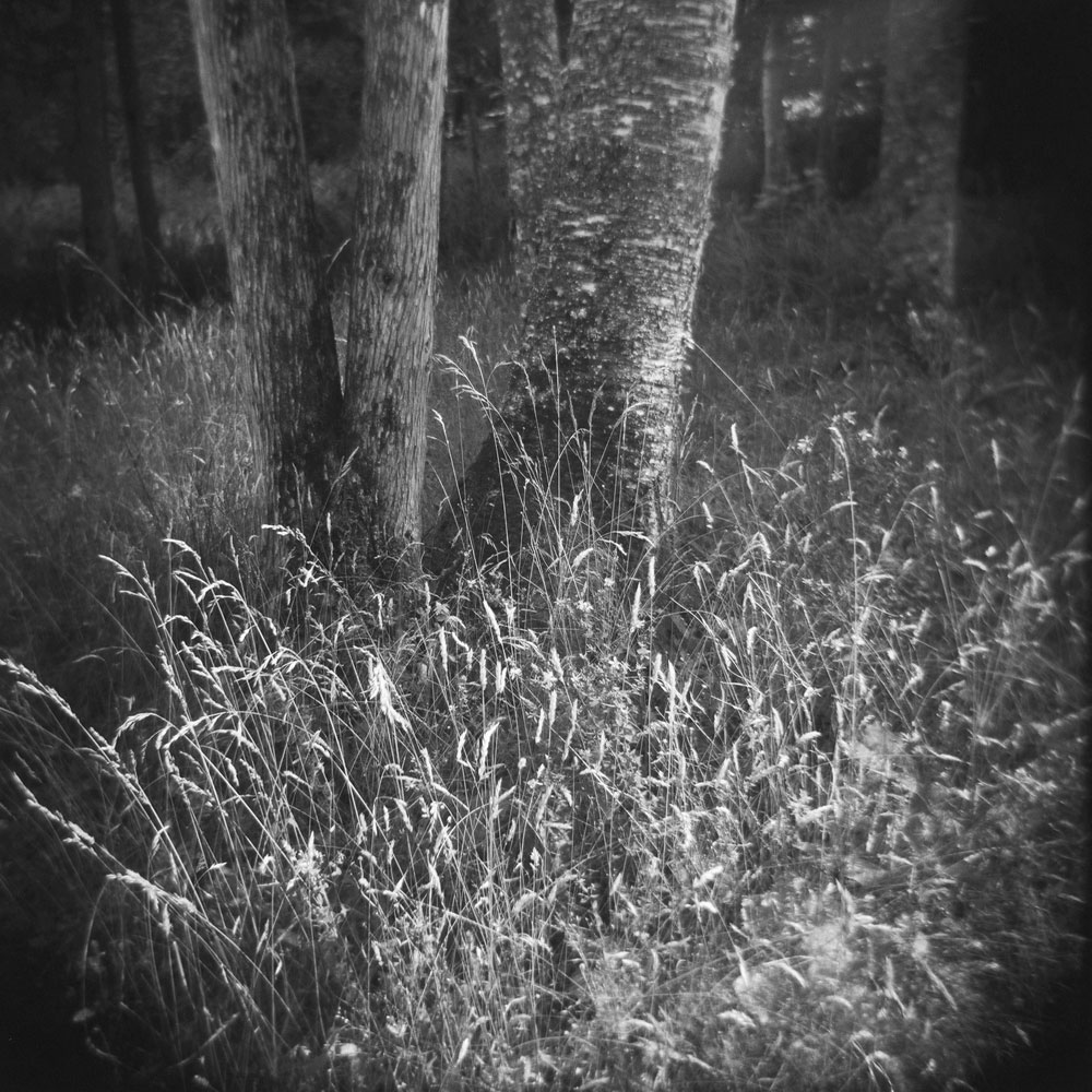 Nature-Square-bw4.jpg