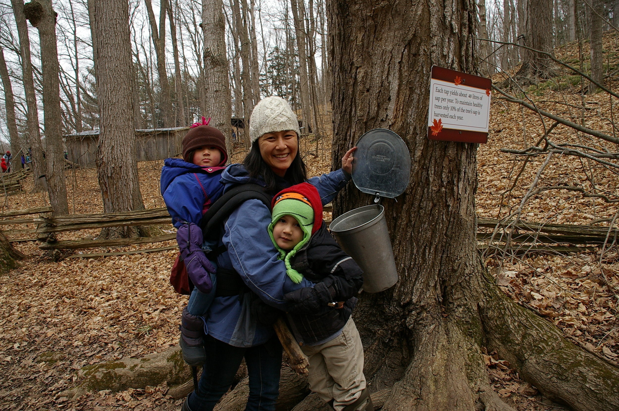 Children and their caregivers on a walk at the maple syrup farm.