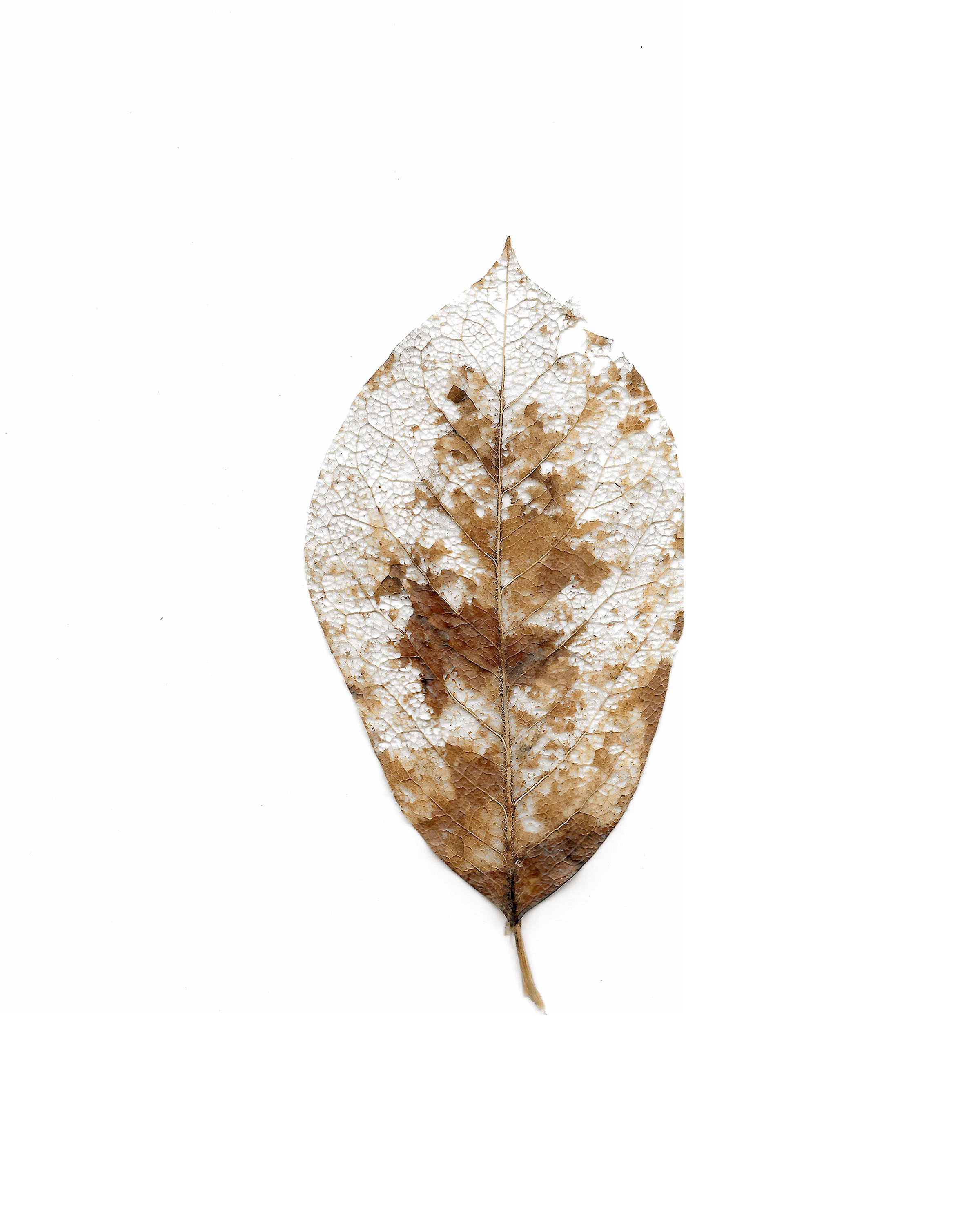 decomposing leaf 2018.jpg
