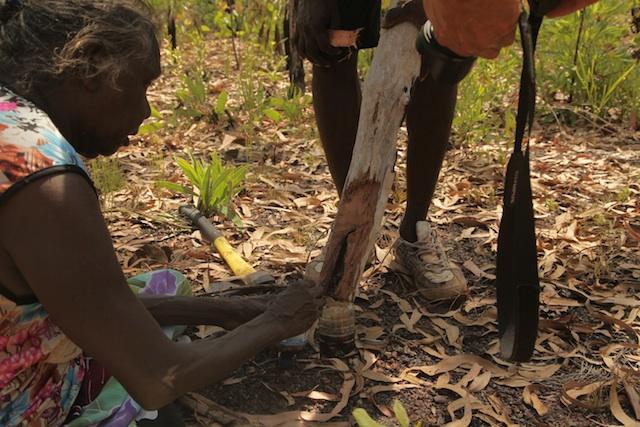 Amala singing with joy as we gather the honey we found while cutting for yidaki