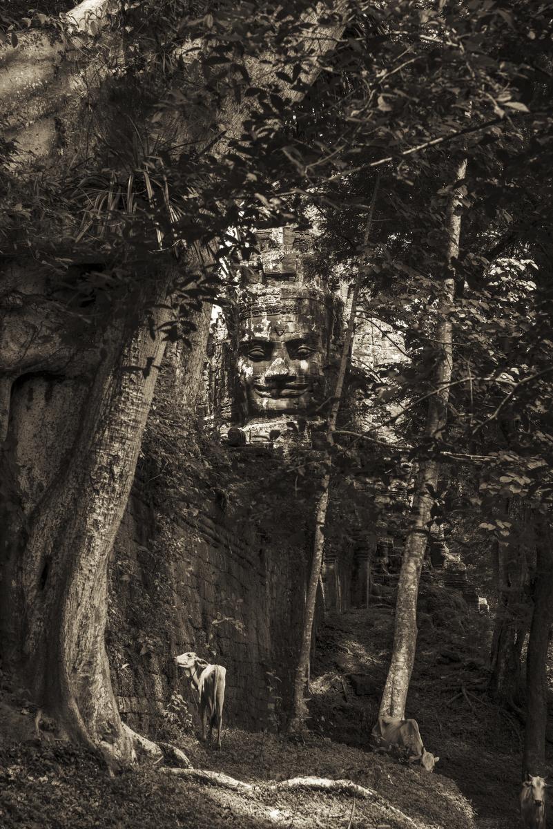 John-McDermott-Overlooking-North Wall-Angkor-Thom.JPG