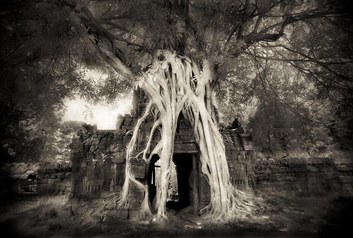 John-McDermott-Ta-Som-Tree.JPG