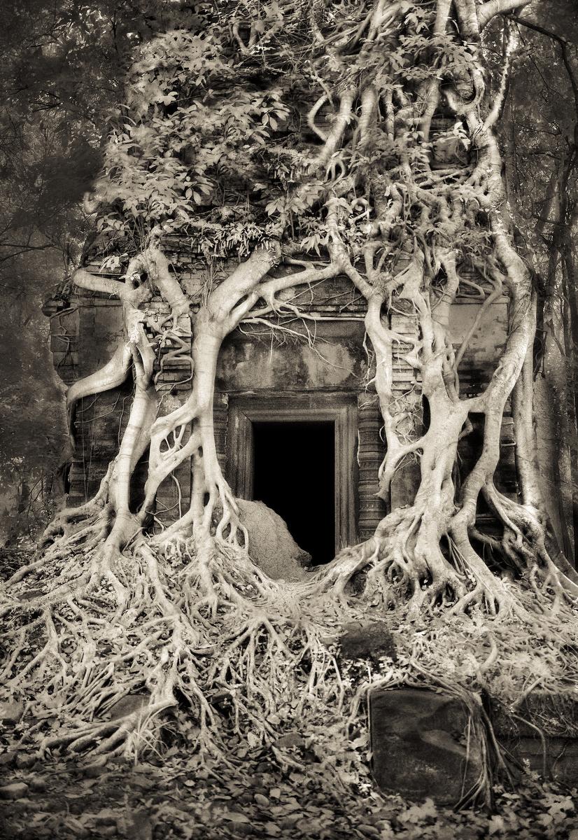 John-McDermott-Tangled-Roots-Koh-Ker.JPG