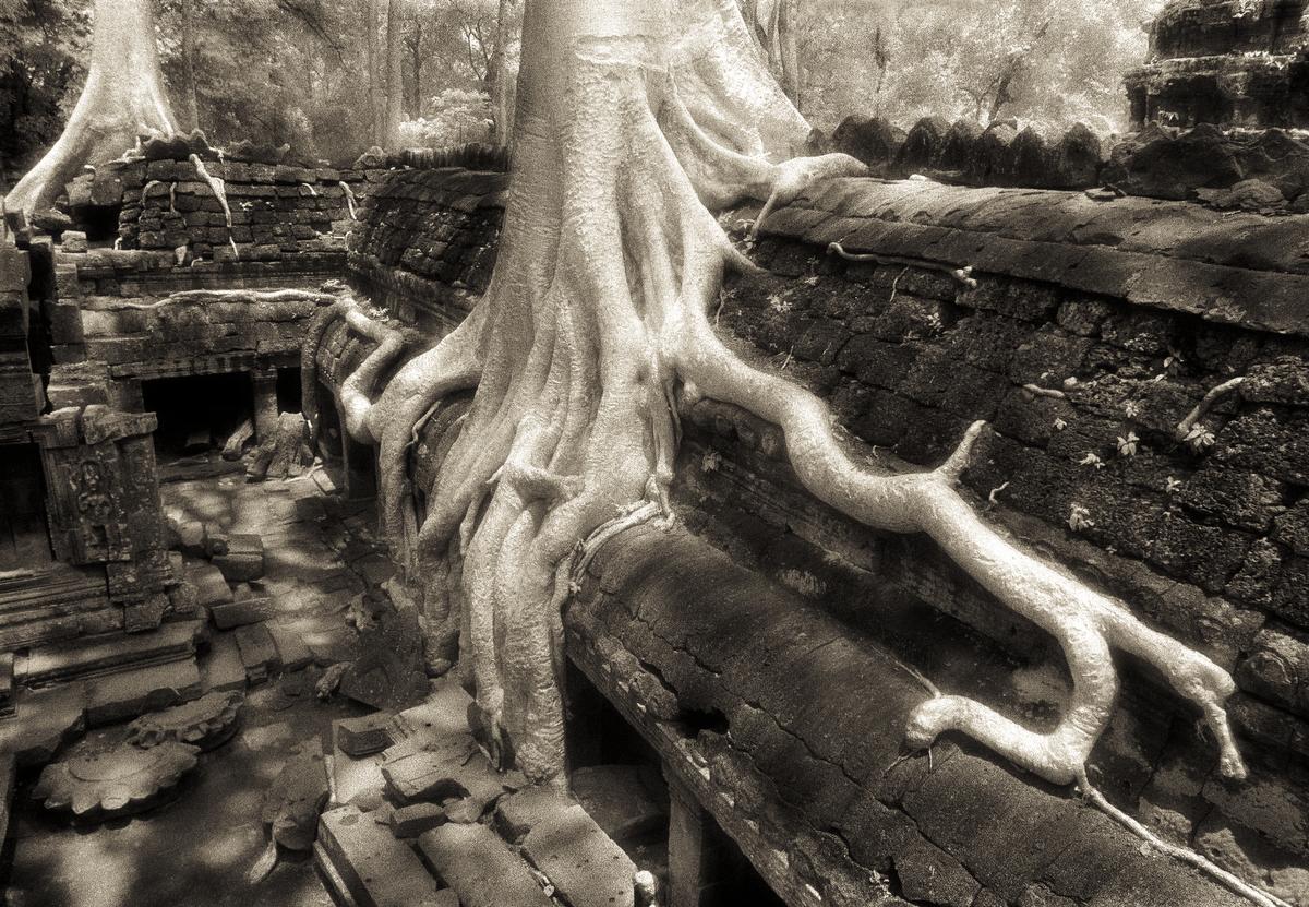 John-McDermott-Tree-Roots-Ta-Prohm.JPG