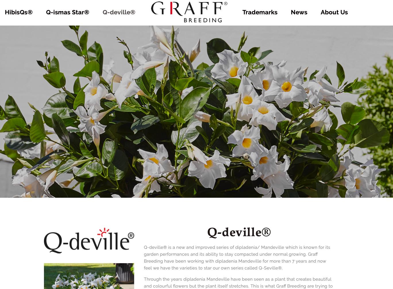 Q-deville.png