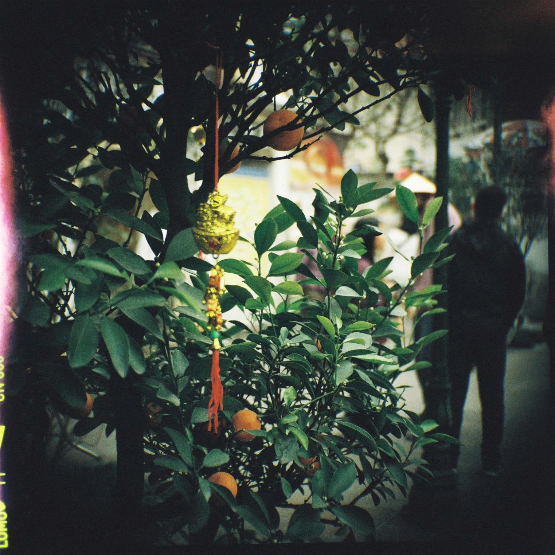 clementine3.jpg