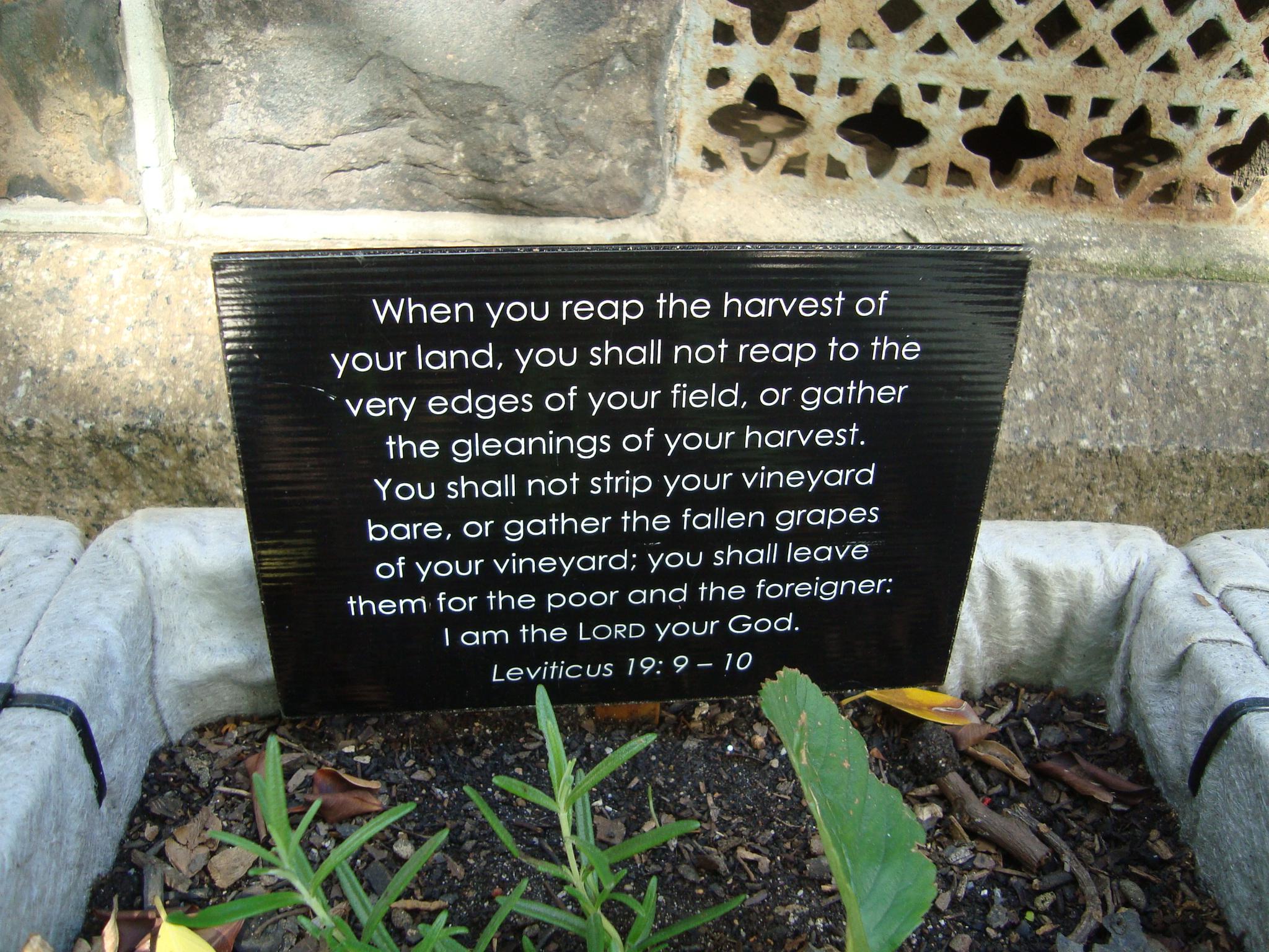 Free Veggie Garden Outside this Church