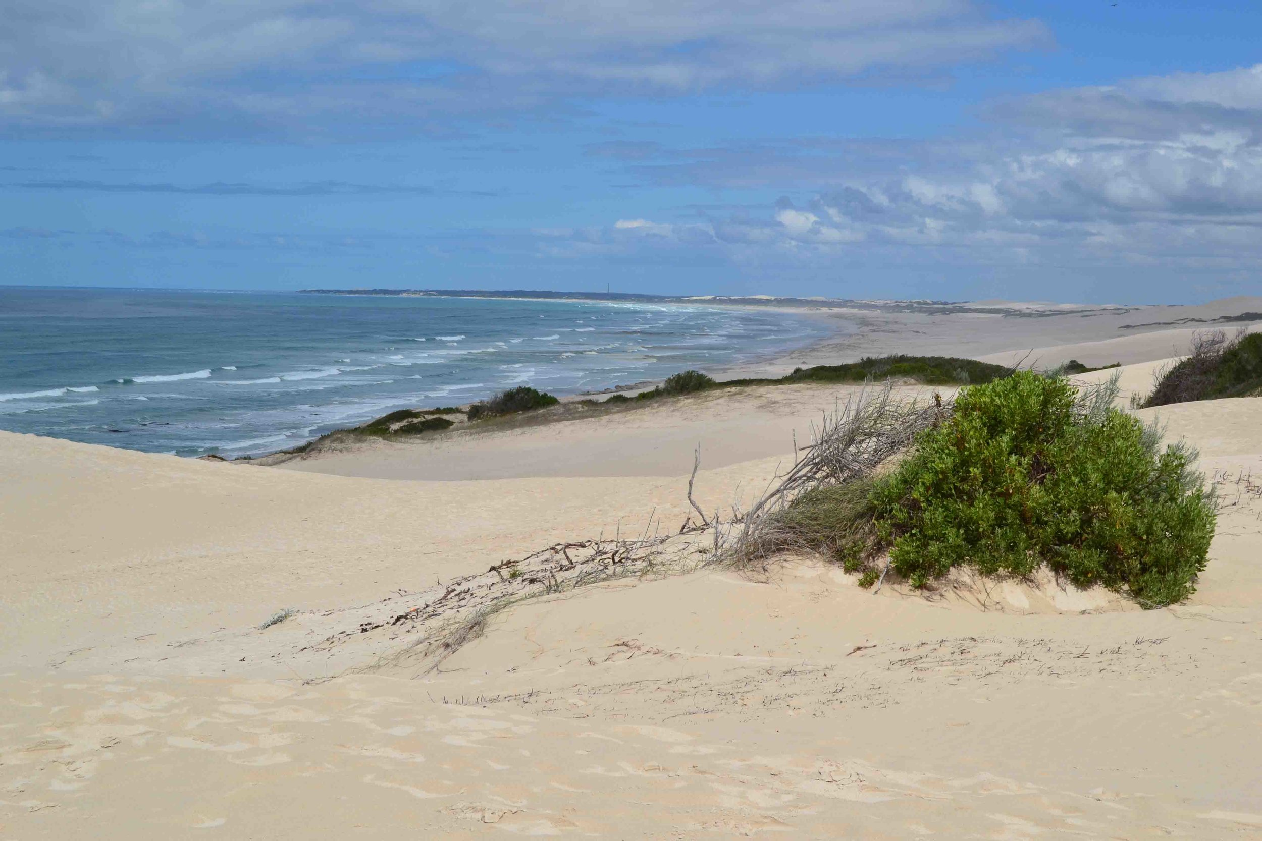 Sprout visits De Hoop Nature Reserve