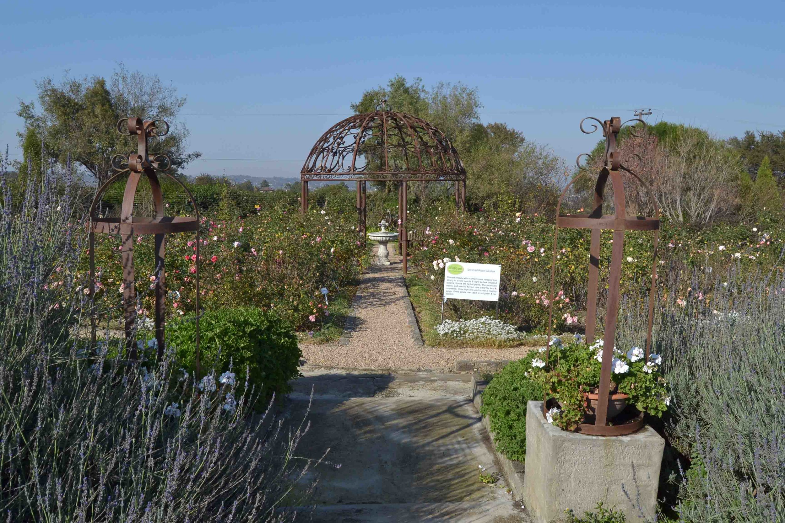 Rose Garden with Steel Gazebo