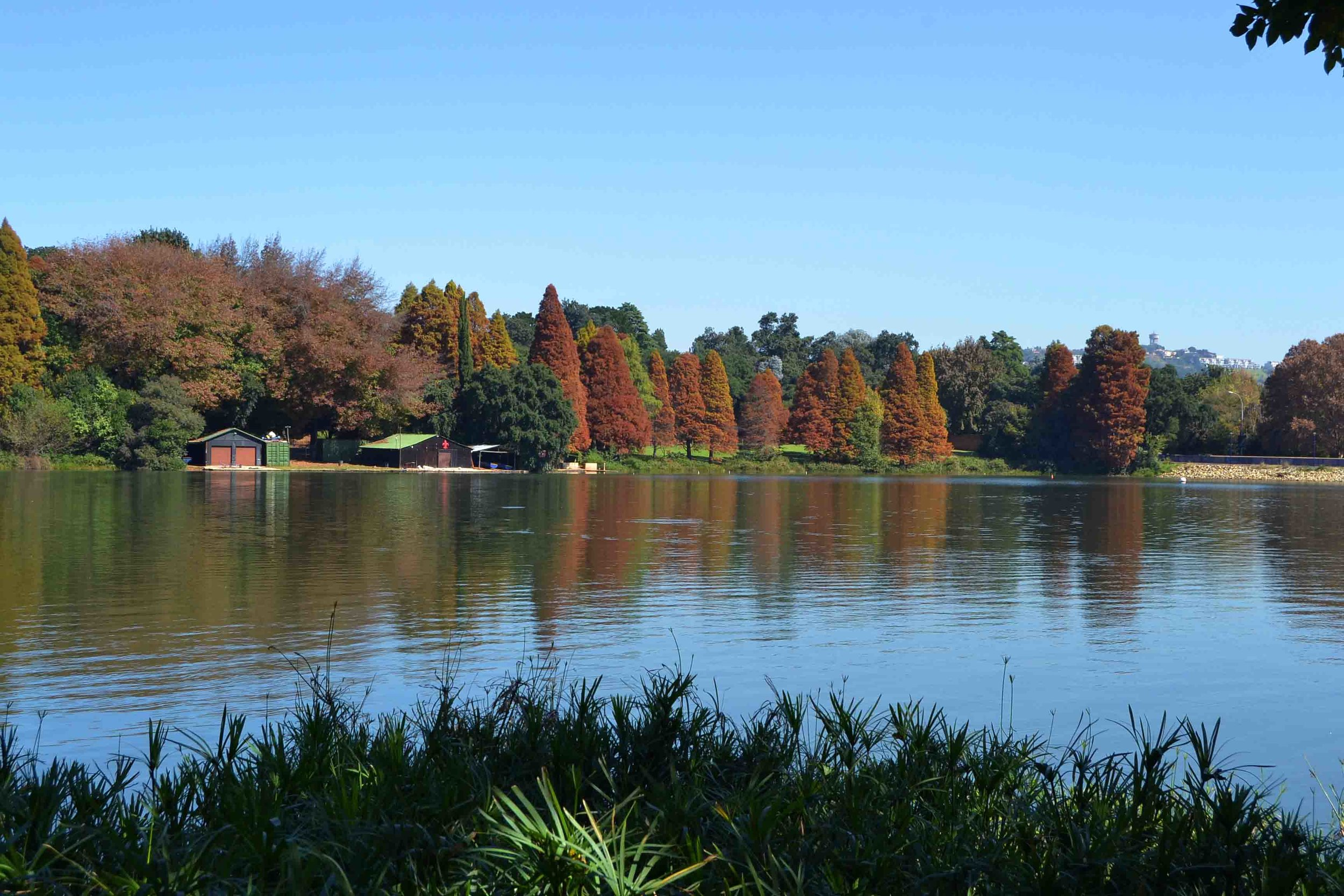Beautiful Autumn Colours at Emmarentia Dam