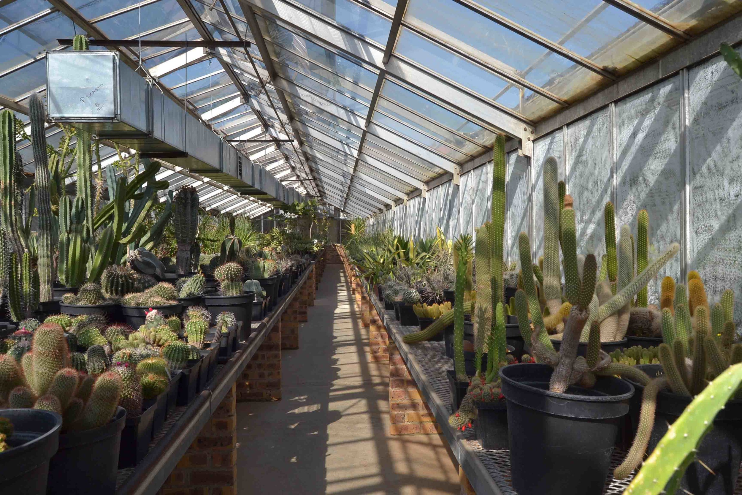 Succulents housed in Greenhouses - viewing by prior arrangement with JHB City Parks