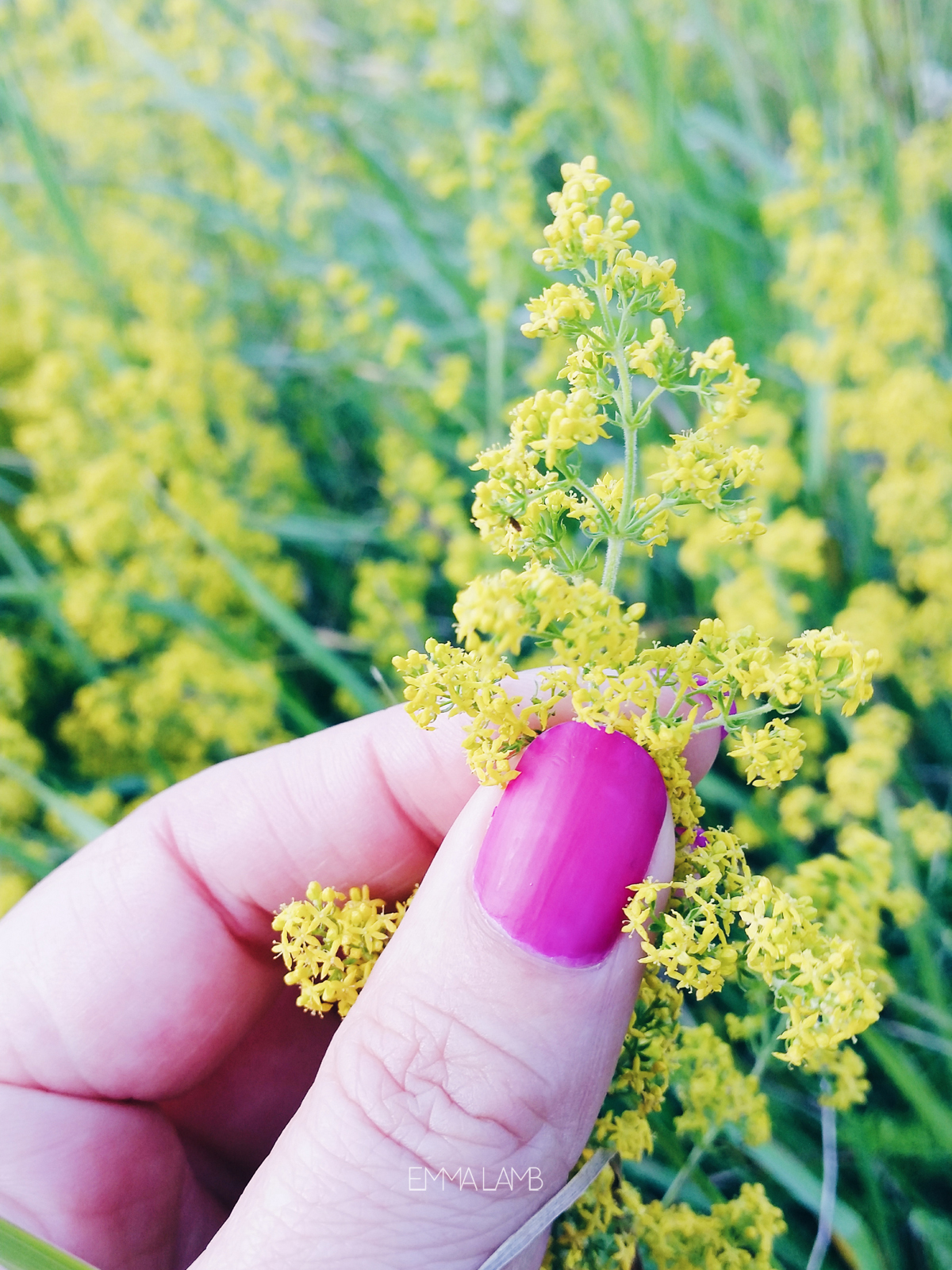 Wild Flowers and Magenta Nails | Emma Lamb