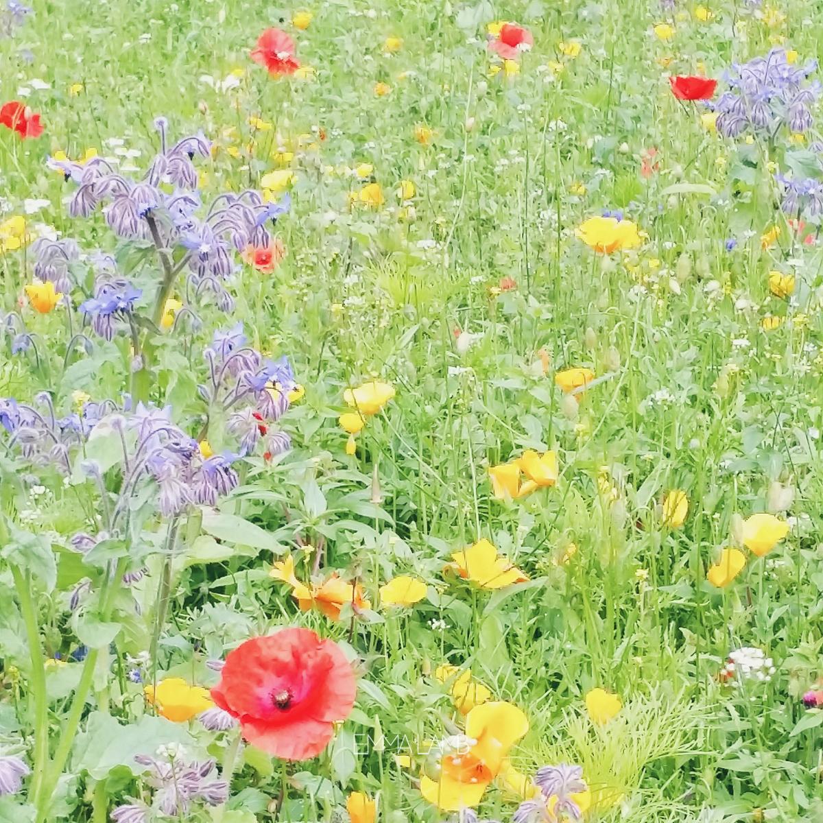 Wild Flowers | Emma Lamb