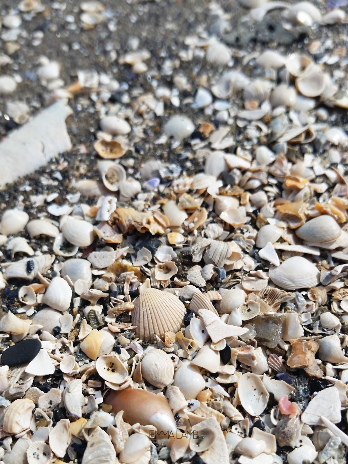 Tiny Treasures - white sea shells | Emma Lamb