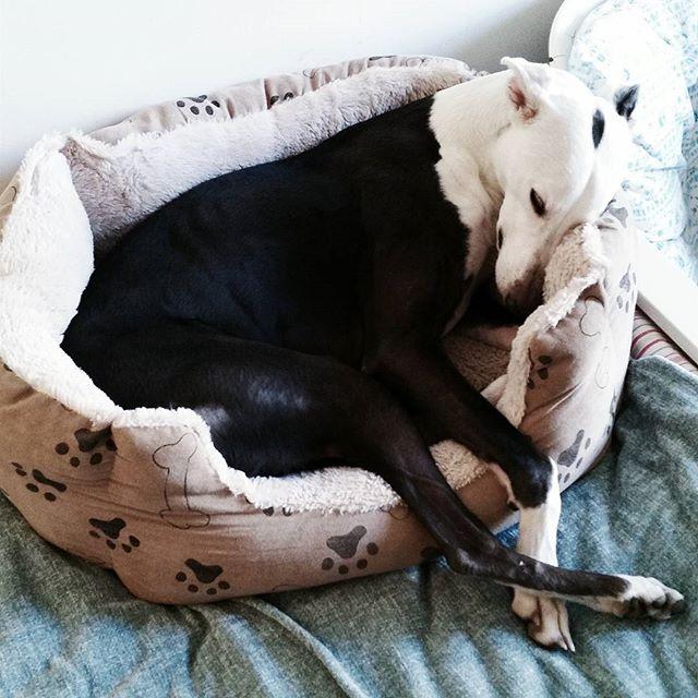 Dog logic 😒🤔😂 (pt 2 of 2) #lunarbabunar