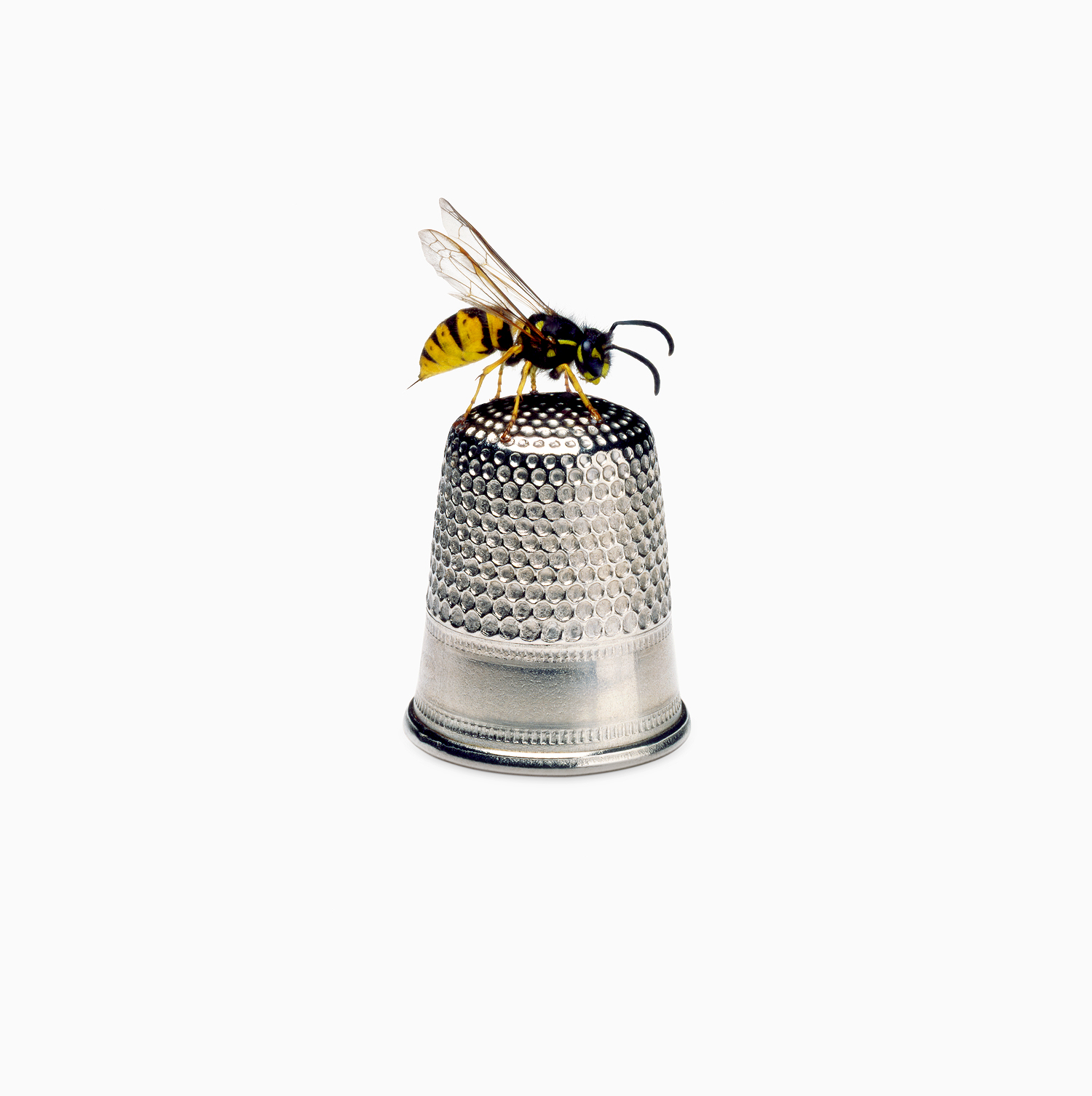 Bee on Thimble