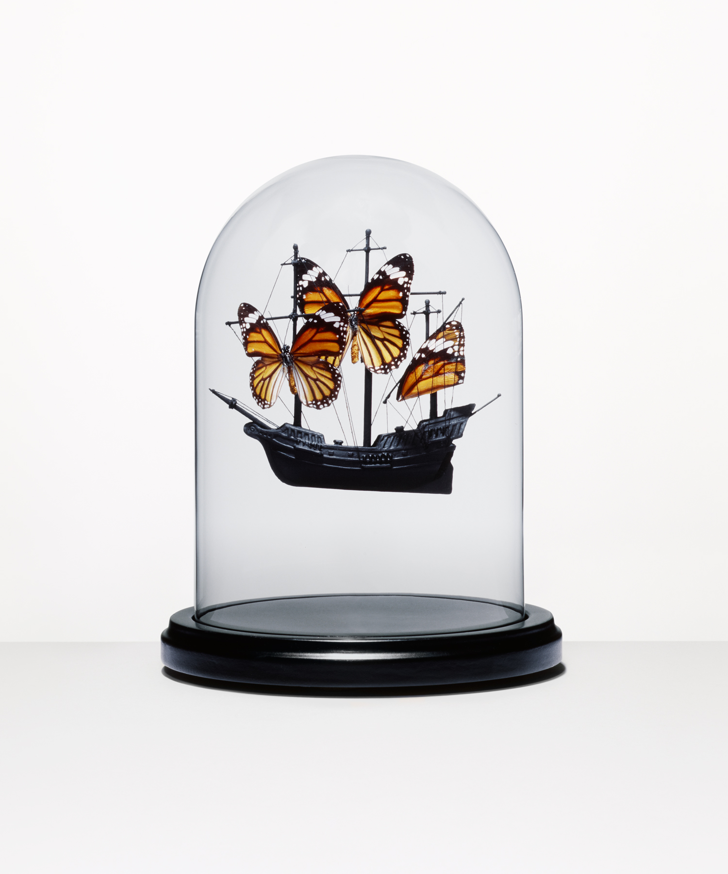 Butterfly Boat In Dome