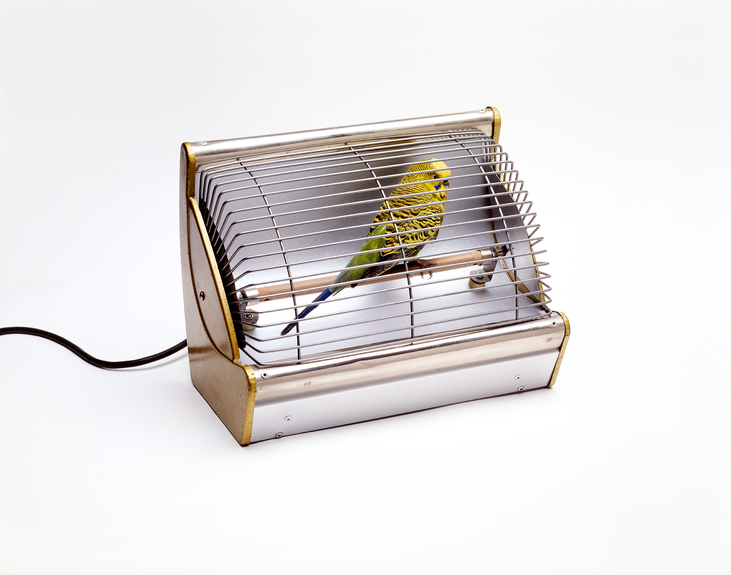Budgie in Heater