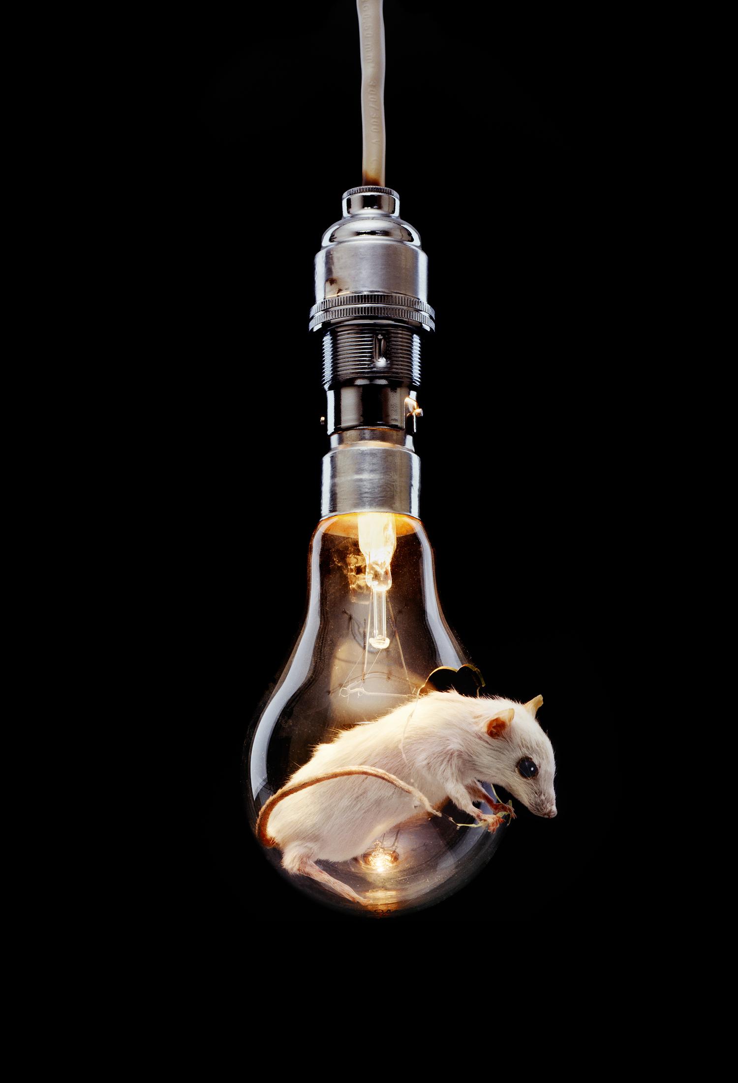 Mouse in light bulb