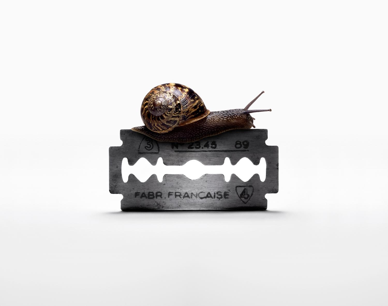Snail on Razor Blade