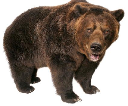 En Bjørn